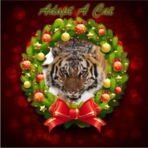 Adopt-a-cat Christmas